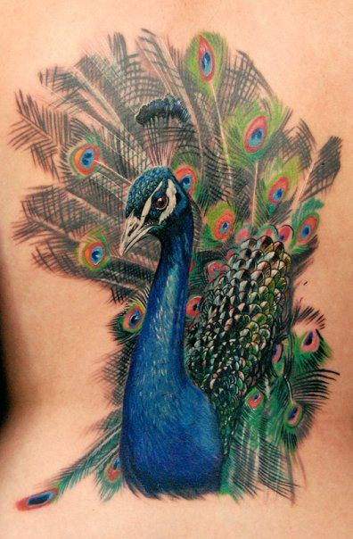 A beautiful, artistic peacock bird tattoo by Phil Garcia, symbolizing nobility and awareness.
