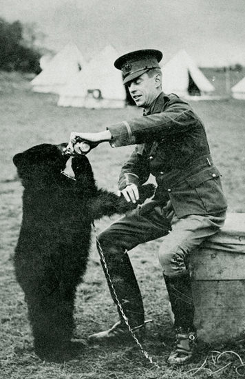 The Canadian black bear at the London Zooh that Winnie the Pooh was named after