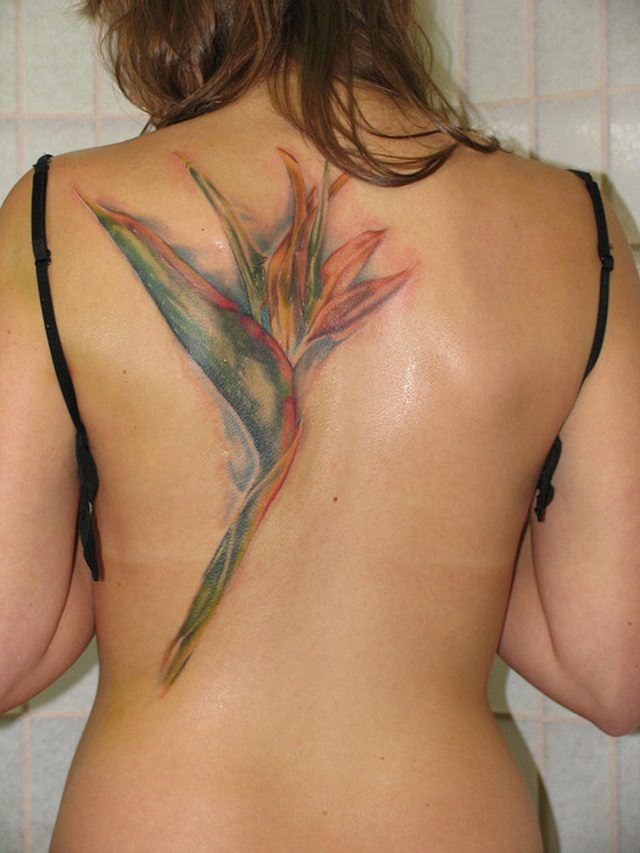 This artistic tattoo of a crane flower shows how the flower resembles a cranes beak and plumage